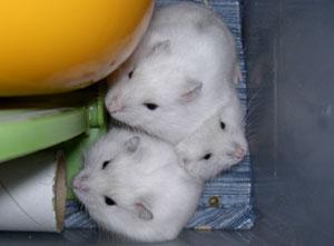 白っ子3姉妹