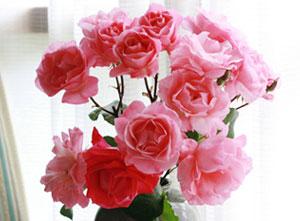 おばちゃんのバラ