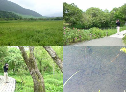 仙石原湿原