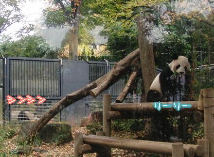小降りでも元気パンダ