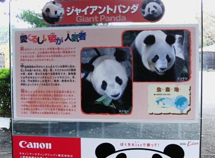 ジャイアントパンダの説明