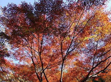 園内も紅葉たくさん