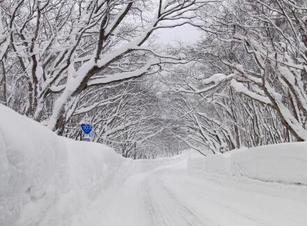 きれいな雪景色