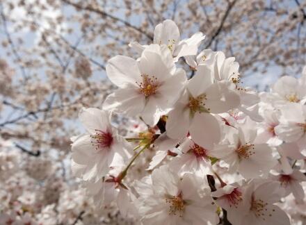4_4sumida14-8.jpg