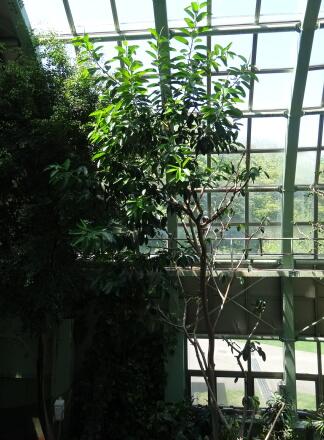 熱帯鳥類館